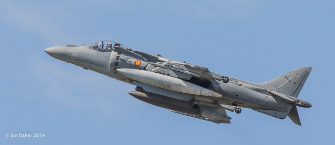 Harrier (29)
