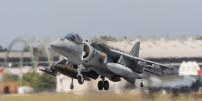 Harrier (30)