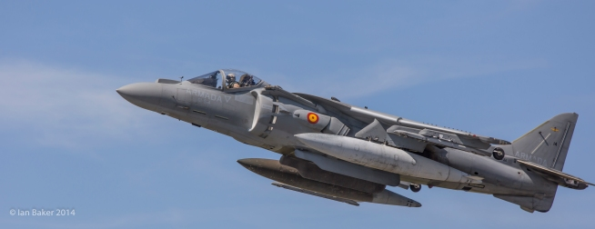 Harrier (4)